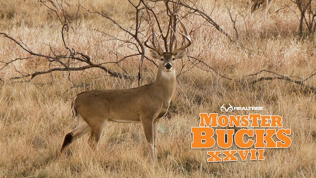 David Blanton's Central Texas Monster Buck
