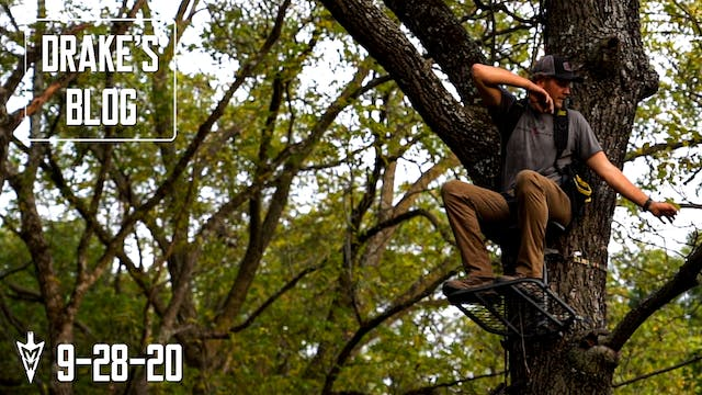 Drake's Blog: Treestand Placement Tip...