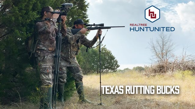 Rattling in Texas Rutting Bucks