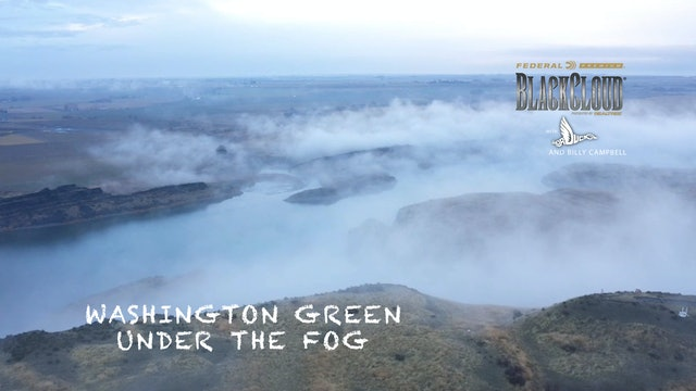Greenhead Delight: Shooting Mallards in the Fog