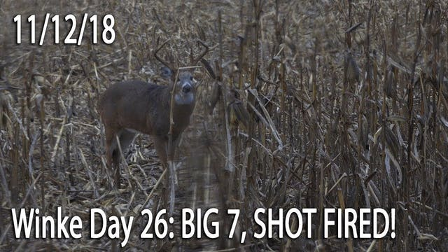 Winke Day 26: Big 7, Shot Fired!