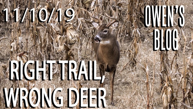 Owen's Blog: Right Trail, Wrong Deer