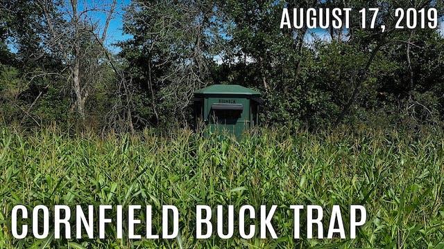 Winke's Blog: Cornfield Buck Trap