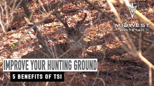 2-19-18: Benefits of Timber Stand Improvement | Midwest Whitetail