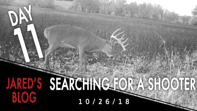 Jared's Blog: Still Searching For A Shooter Buck