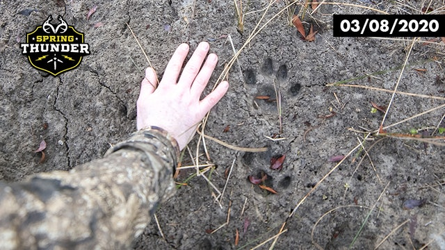 Florida Panther Tracks | Opening Day of Turkey Season | Realtree Spring Thunder