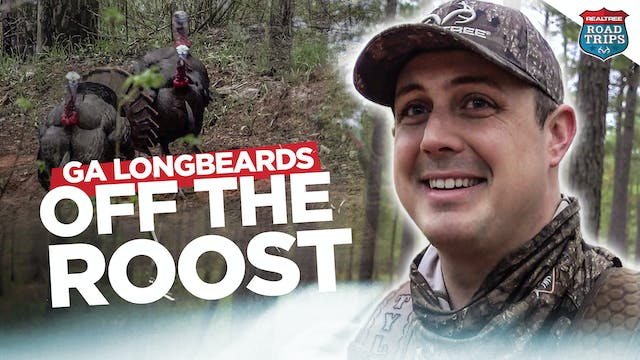 Busting Beaks Right Off the Roost | G...
