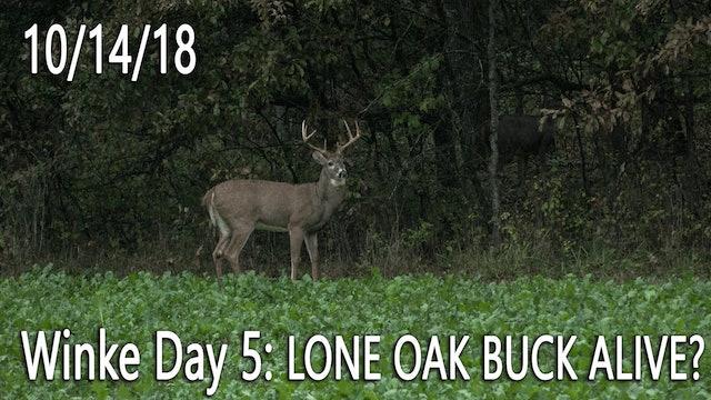 Winke Day 5: Lone Oak Buck Alive?