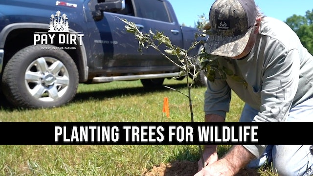 Benefits of Planting Trees for Wildlife | Chestnuts, Fruits and Oaks | Pay Dirt
