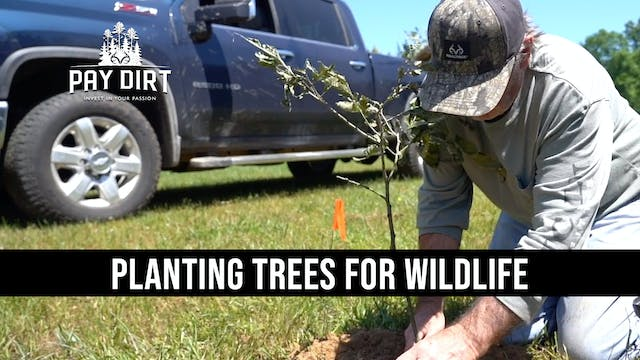 Benefits of Planting Trees for Wildli...
