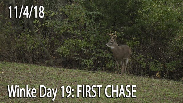 Winke Day 19: First Chase