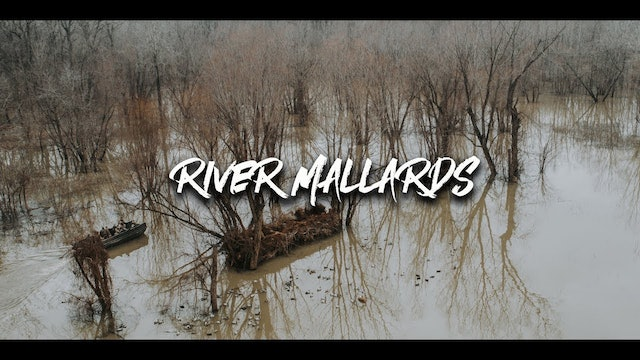 Hunting River Mallards Like We're Mad At 'Em | Willow Slough | DayBreak Outdoors