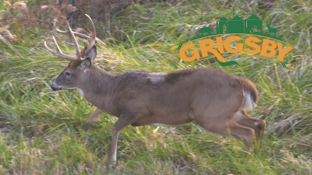 A Major Missed Opportunity | The Whitetail Rut Is in Full Swing | The Grigsby