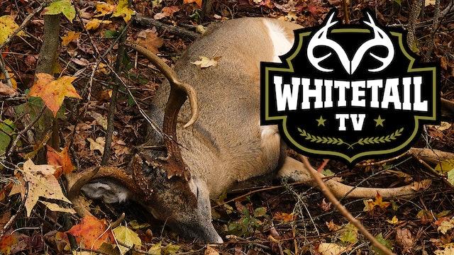 Mystery Buck Death, Unfortunate Hunt Ending