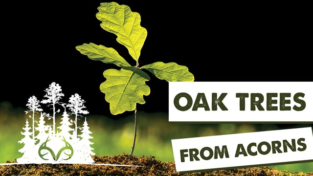 3 Ways to Establish Oak Trees