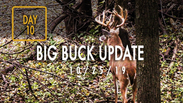 Jared Day 10: Big Buck Update, Close-Up Snort Wheeze