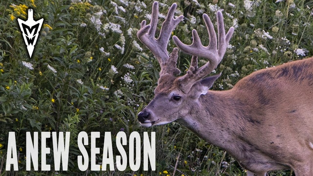 8-19-19: Big Velvet Bucks, Season Introduction | Midwest Whitetail