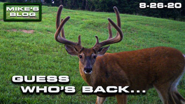 Mike's Blog: A Giant Buck Returns | S...
