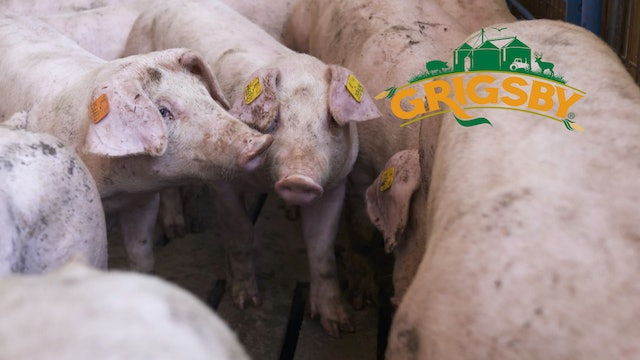Touring the Grigsby Hog Barn | Research Center | The Grigsby