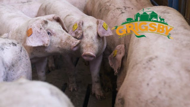 Touring the Grigsby Hog Barn | Resear...