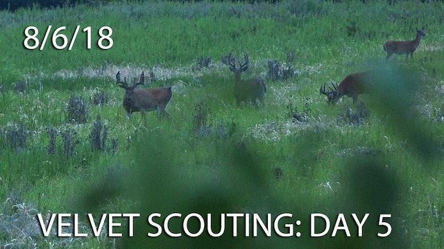 Winke's Blog: Velvet Scouting Day 5