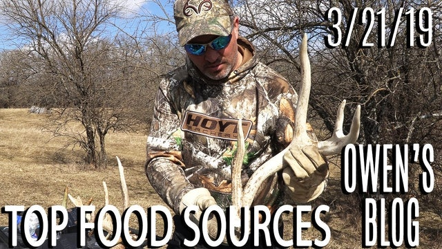 Owen's Blog: Shed Hunting, Top Food Sources