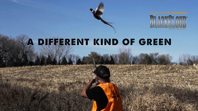 A Different Kind of Green | South Dakota Upland Bird Hunting | Black Cloud