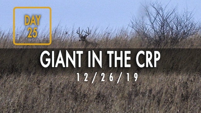 Jared Day 25: Giant Buck Chases Doe in CRP Field