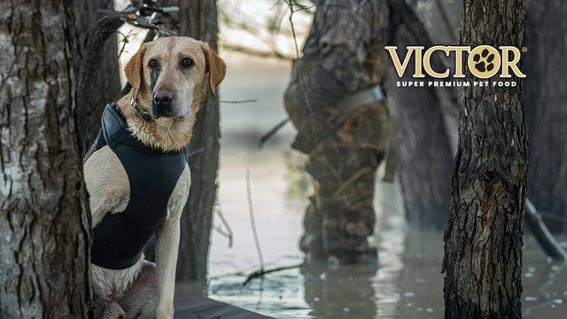 Meet General Dingus the Duck Dog | A Heroic Dog Born to Serve | Fueled by VICTOR