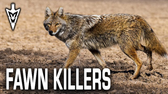 Chasing Fawn Killers, Tips for Summer...