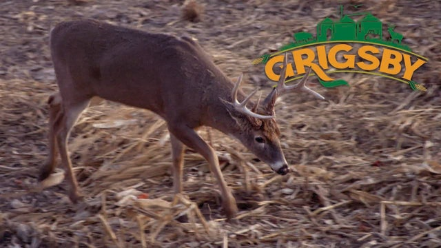 Crossbow Hunting in Illinois | Youth Hunter Success in the Midwest | The Grigsby