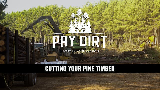 Pay Dirt E12: Cutting Your Pine Forest