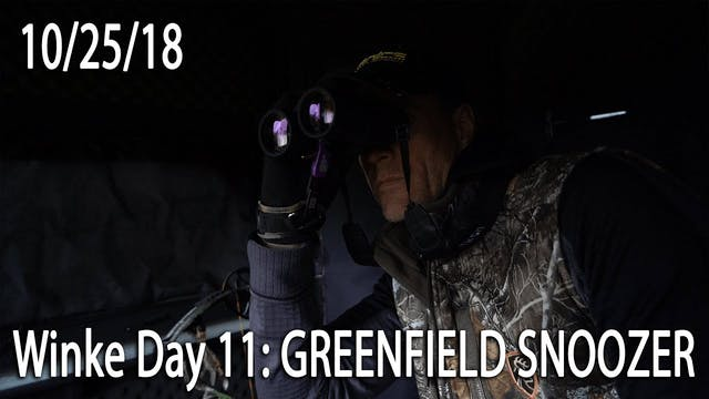 Winke Day 11: Greenfield Snoozer