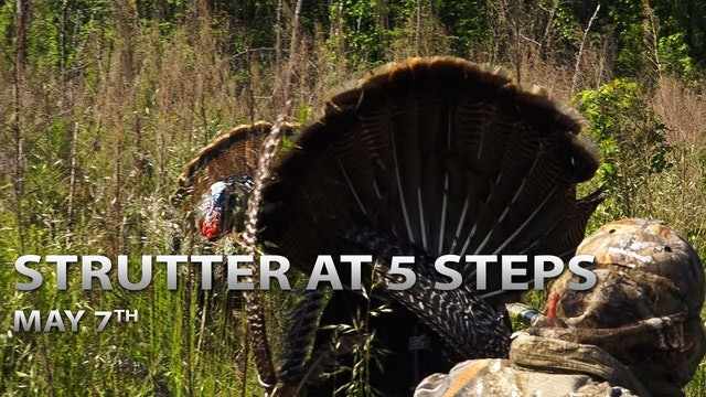 5-7-18: Strutter at 5 Steps, Canada Gobbler | Spring Thunder