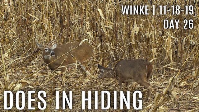 Winke Day 26: Does In Hiding, Avoiding The Food