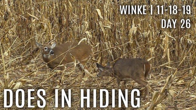 Winke Day 26: Does In Hiding, Avoidin...