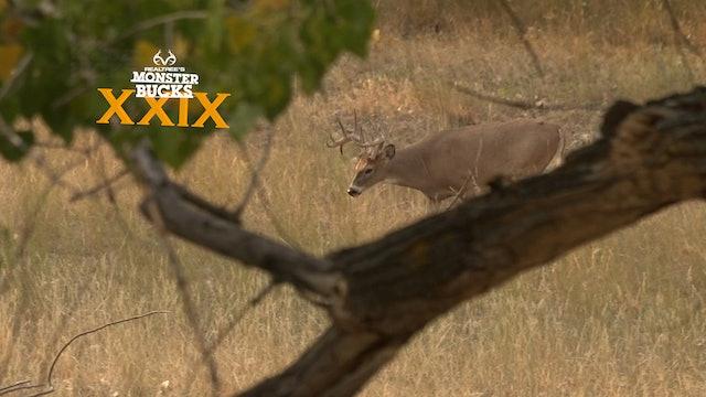 Cody Kelley's Montana River Bottom Buck | Monster Bucks 2021