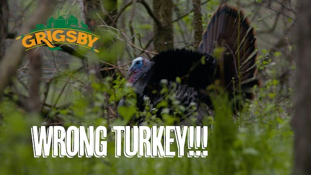 Turkey Hunting in Big Ag Country | Tw...