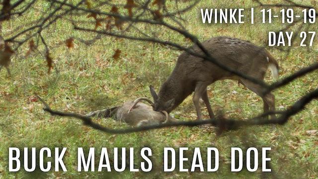 Winke Day 27: Rut Crazed Buck Mauls Dead Doe