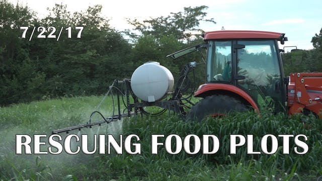 Winke's Blog: Rescuing Food Plots
