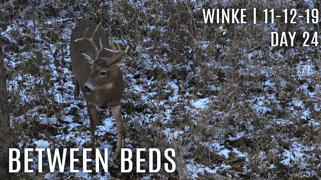 Winke Day 24: Between Beds, Finding Cruisers