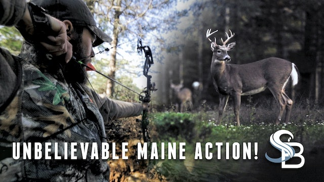 The Reality of Deer Hunting in New England | Early Season Bowhunting | Sea Bucks