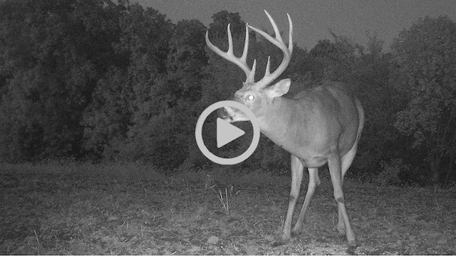 10-9-17: Risk vs Reward, Don't Blow It | Midwest Whitetail