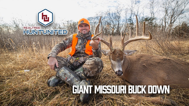 Split Brow Missouri Giant