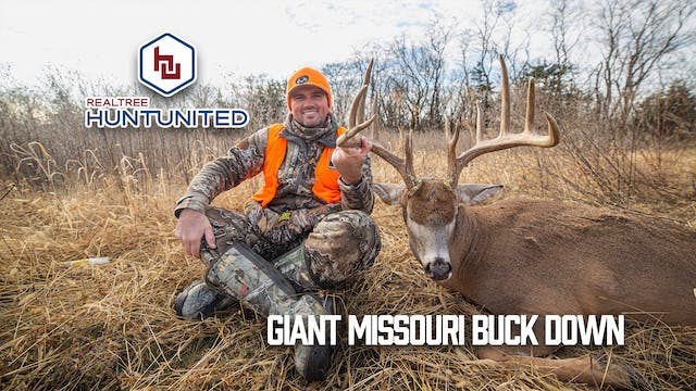 Split Brow Missouri Giant