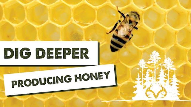 Dig Deeper: How To Make Honey