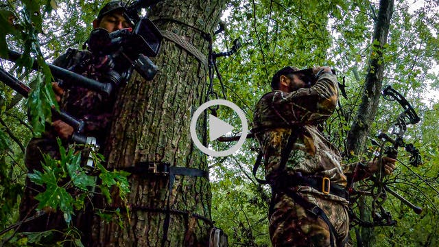 Mike's Blog: Some Rainy-Day Deer Hunt...
