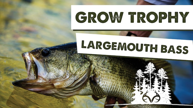 Small Lake Management Tips for Trophy Largemouth Bass