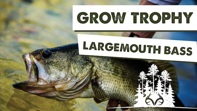 Small Lake Management Tips for Trophy...