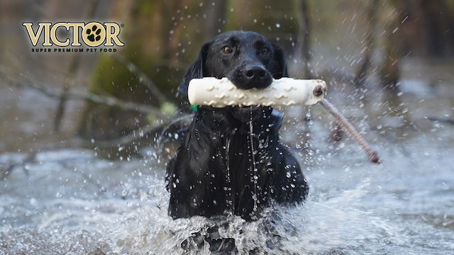 Meet Kanye the Duck Dog | Man's Best Friend Isn't Man | Fueled by Victor
